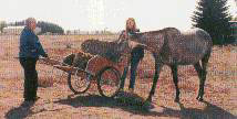 take hay to horses cart